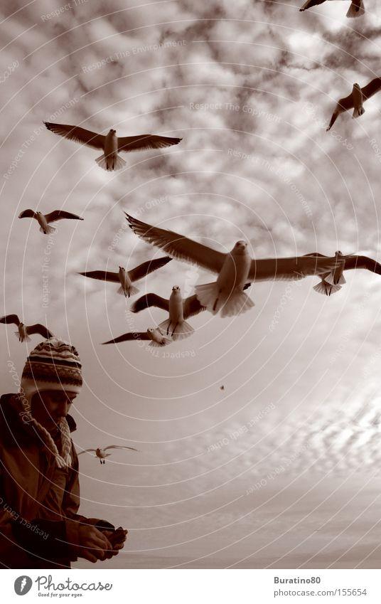 Angriff der Möwen Frau Mensch Himmel Winter Wolken kalt grau Vogel frei nah Möwe Tier Angriff