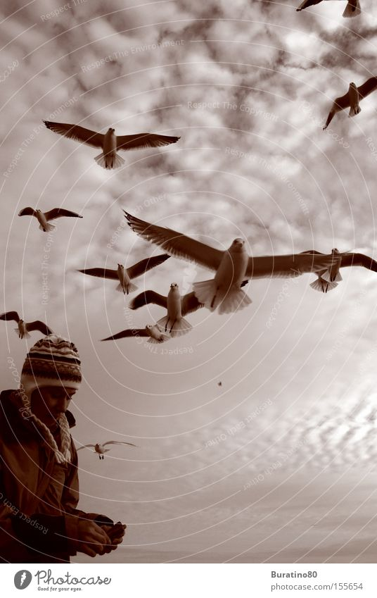 Angriff der Möwen Frau Mensch Himmel Winter Wolken kalt grau Vogel frei nah Tier