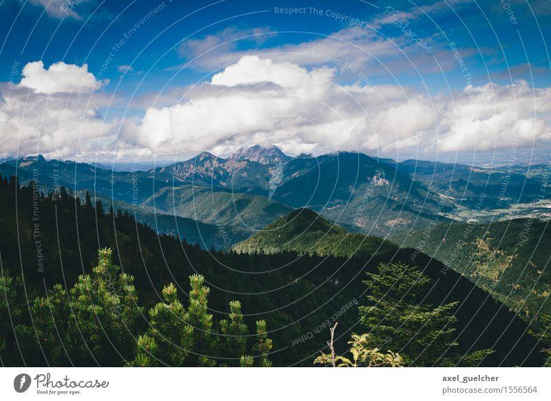 Mountain View Natur Landschaft Himmel Wolken Sommer Schönes Wetter Baum Wald Hügel Berge u. Gebirge Österreich entdecken gehen genießen wandern Lebensfreude
