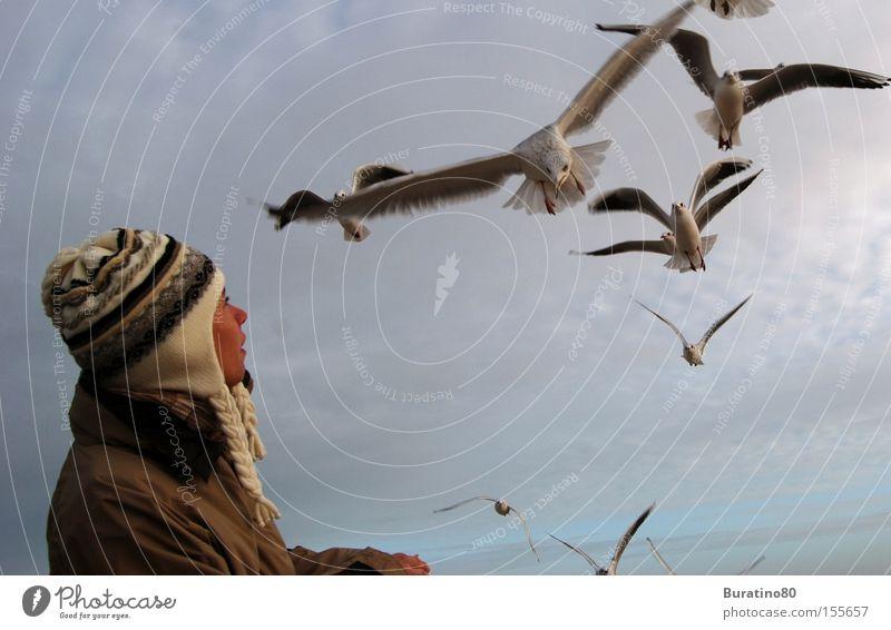 Und plötzlich waren Sie so nah ! Frau Himmel Winter kalt Freiheit Vogel Angst elegant Luftverkehr Kontakt Mütze Möwe Angriff Mensch Sturzflug