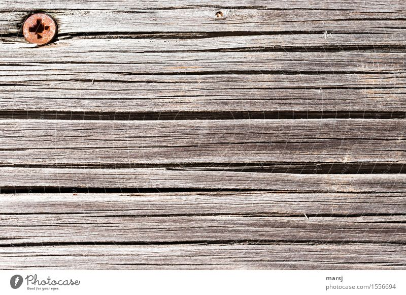 Rostkopf im Eck Holzbrett Schraubenkopf Stahl alt Kreuzschlitzschraube Maserung verwittert Länge Farbfoto Gedeckte Farben Außenaufnahme Nahaufnahme
