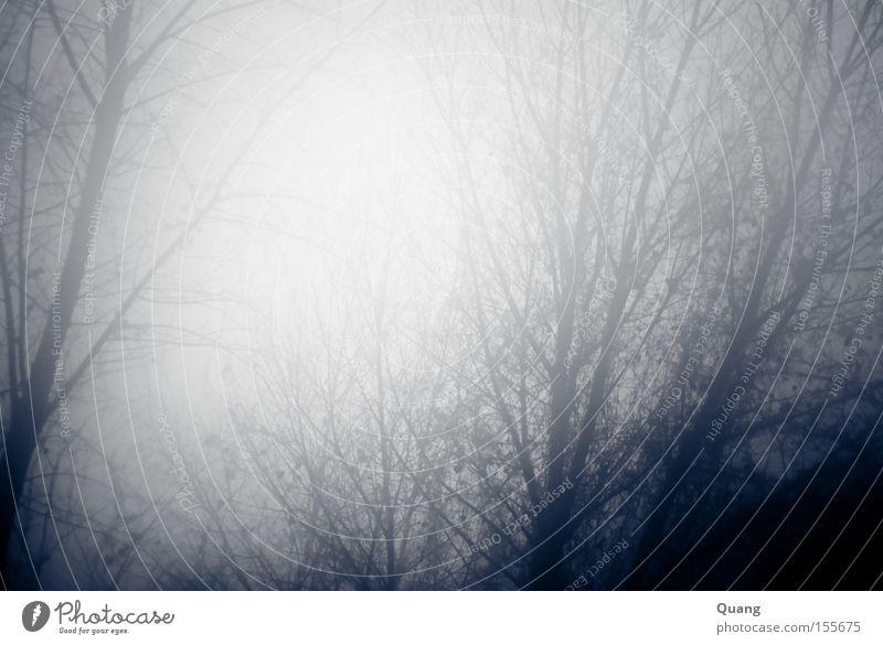 Fog Nebel Baum Schwarzweißfoto grau Berlin-Mitte geheimnisvoll Winter Perspektive