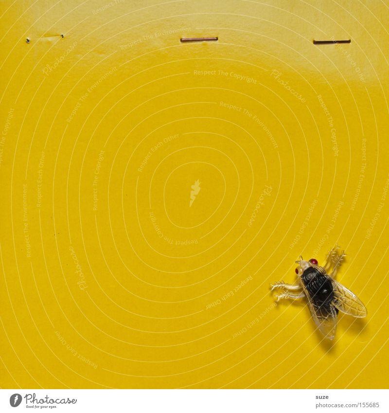 Luftpost Dekoration & Verzierung Feste & Feiern Halloween Fliege Kunststoff fliegen Ekel gruselig lustig gelb Insekt Hintergrund neutral Scherzartikel Karton