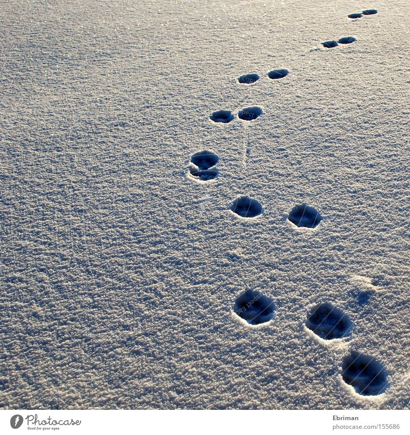 Auf und davon Natur weiß Winter Einsamkeit kalt Schnee Hund Wege & Pfade Eis Spuren wild Wildtier Richtung Fußspur Säugetier Pfote