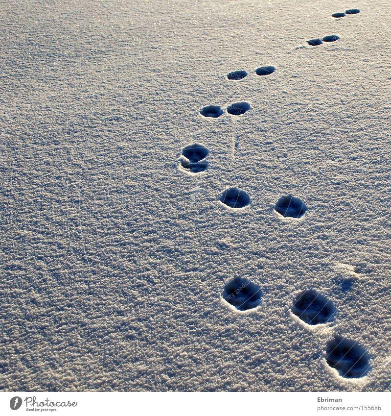 Auf und davon Spuren Pfote Fußspur Hund Schnee kalt Winter weiß Einsamkeit Natur Wildtier wild Eis Bogen Wege & Pfade Richtung Säugetier