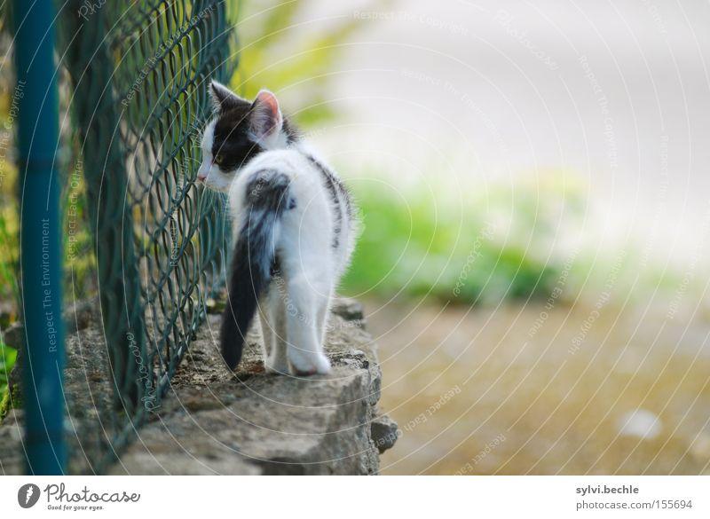 wohin der weg mich führt Freiheit Mauer Wand Wege & Pfade Katze drehen gehen Zaun Wende Säugetier geradeaus frei Farbfoto mehrfarbig Außenaufnahme Menschenleer