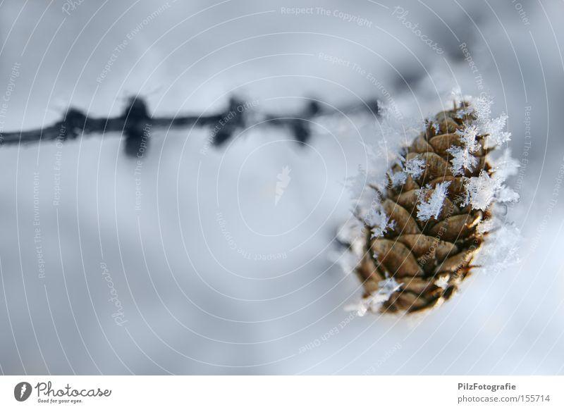 Wintertraum Natur weiß Baum Winter kalt Schnee Eis Ast gefroren Kristallstrukturen Nadelbaum Tannenzapfen Schneesturm Lärche