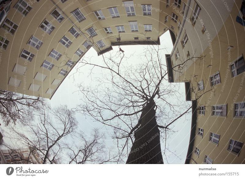 ich schaue auf Hof Stadthaus Fenster Baum Berlin Potsdam Mieter Himmel Hinterhof Winter kalt abweisend Ecke Treppe