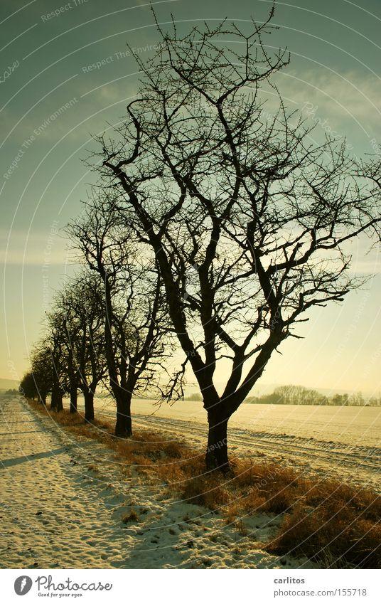 Bitte hinten anstellen ...... Baum Winter Ferne Schnee Ordnung skurril aufgereiht Winterspaziergang