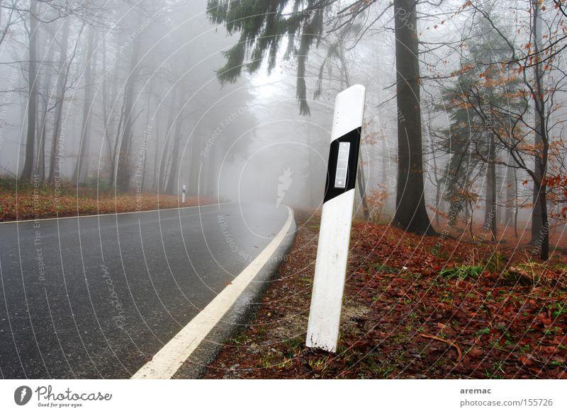 Feuchtraum Baum Straße Wald Herbst Regen Nebel nass fahren Verkehrswege feucht Verkehrszeichen Straßennamenschild Schilder & Markierungen Leitpfosten