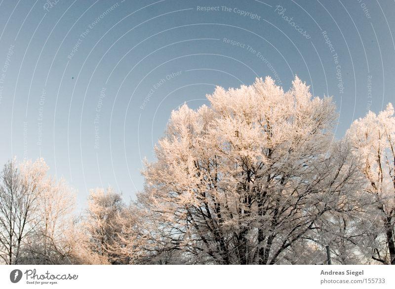 Kalt DDraußen Winter Schnee Eis kalt Baum weiß Himmel blau Dresden Raureif Frost