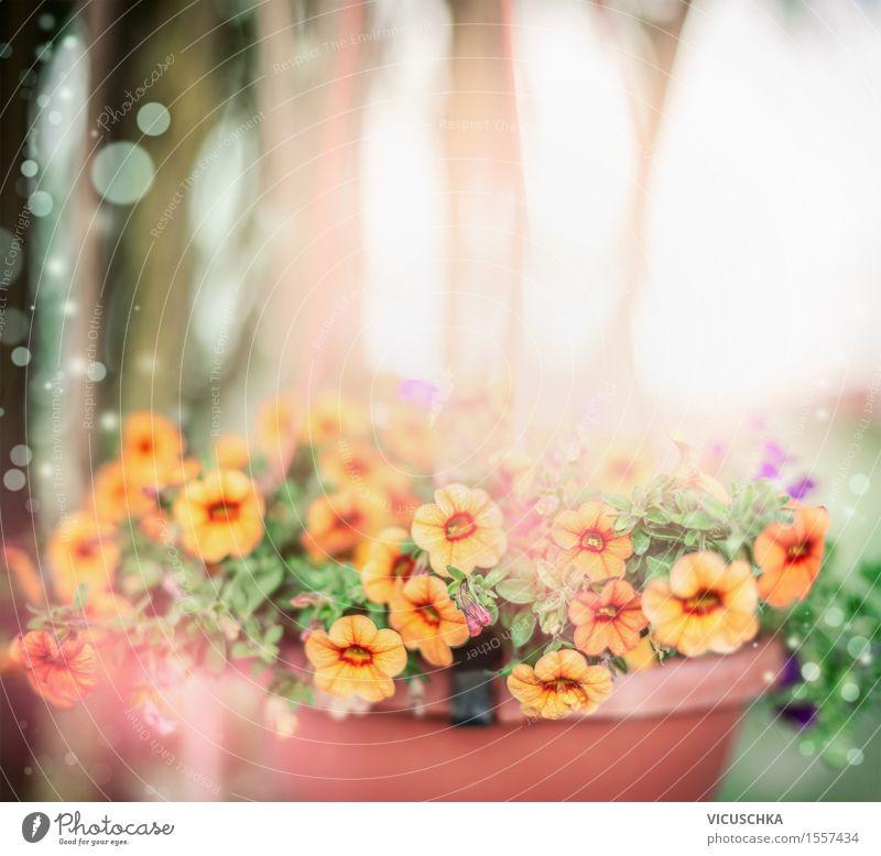 Schöne Sommerblumen im Topf Lifestyle Garten Natur Pflanze Sonnenlicht Frühling Herbst Schönes Wetter Blume Sträucher Blatt Blüte Park Blumenstrauß Blühend rosa