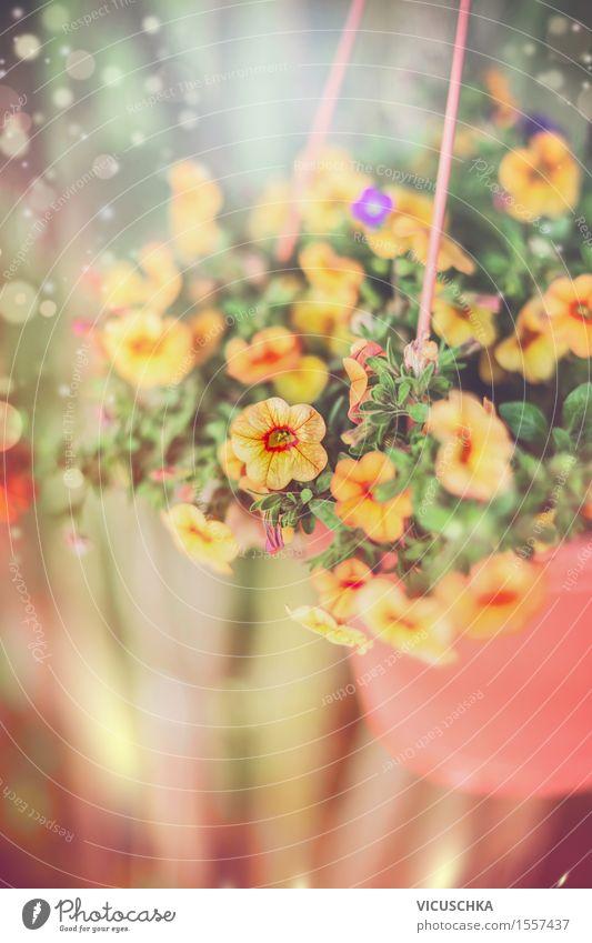 Hängende Garten Blumen im Topf Lifestyle Design Sommer Dekoration & Verzierung Natur Pflanze Sonnenlicht Frühling Herbst Blatt Blüte Park Terrasse Blühend rosa