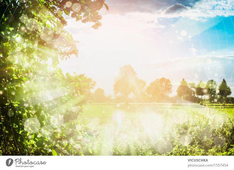 Sommer Natur Hintergrund mit Sonnenstrahlen . Himmel schön grün Baum Blatt Frühling Wiese Hintergrundbild Stil Lifestyle Garten springen Design Park