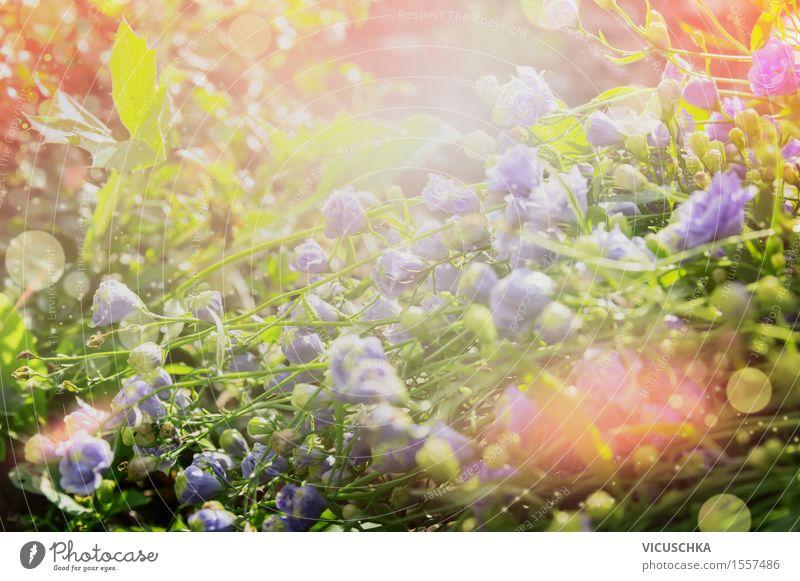 Blumen Bett im Sommer Garten Stil Design Umwelt Natur Pflanze Sonnenaufgang Sonnenuntergang Sonnenlicht Frühling Herbst Schönes Wetter Gras Blatt Blüte Park
