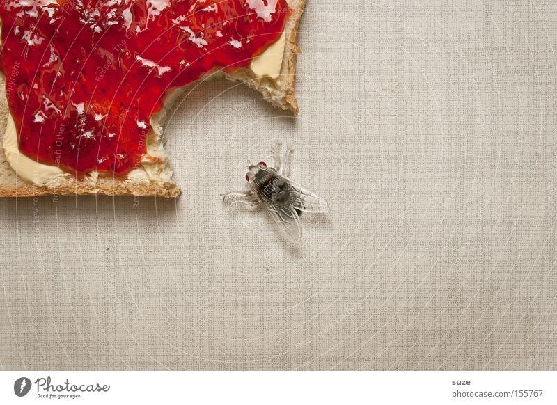 Imbiss lustig Lebensmittel Fliege Ernährung Dekoration & Verzierung süß Kreativität Idee Insekt Frühstück lecker Brot Bioprodukte Fasten beißen Vegetarische Ernährung