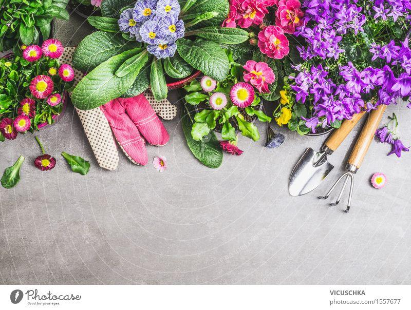 Blumentöpfe mit Gartengeräte und Handschue Natur Pflanze Sommer Blatt Frühling Blüte Herbst Stil Stein Design Wohnung Häusliches Leben Dekoration & Verzierung