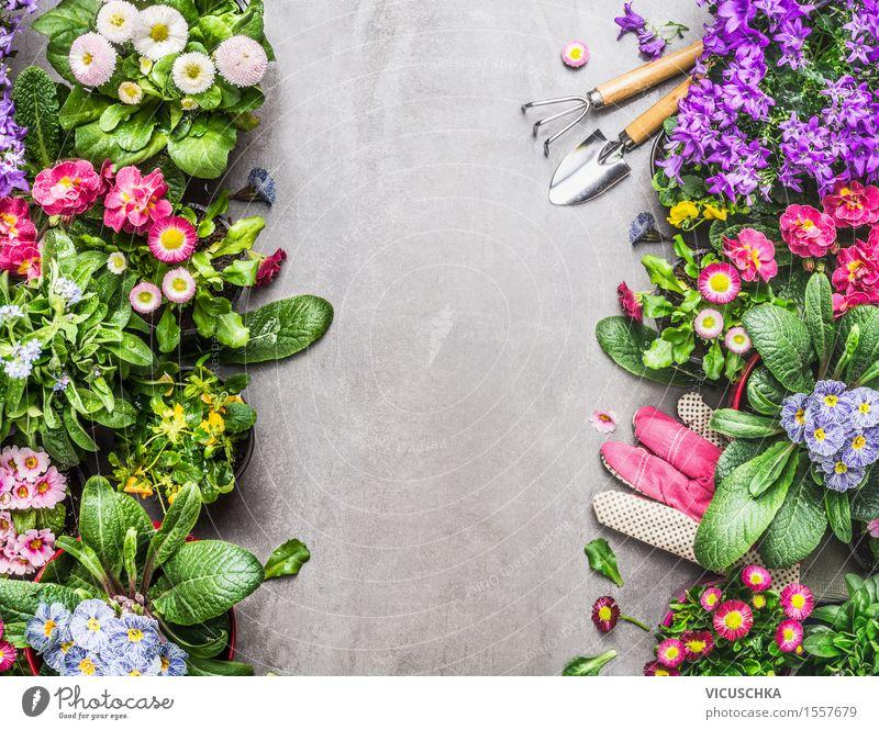 Gartenwerkzeuge und Handschuhe mit bunten Topfblumen Natur Pflanze Sommer Blume Blatt Frühling Blüte Gras Stil rosa Design Park Häusliches Leben