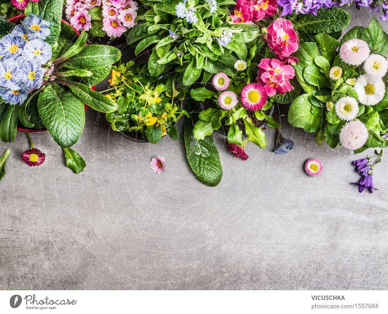 Auswahl von Sommer Gartenblumen in Töpfen Stil Design Freizeit & Hobby Häusliches Leben Dekoration & Verzierung Tisch Natur Pflanze Frühling Blume Blatt Blüte