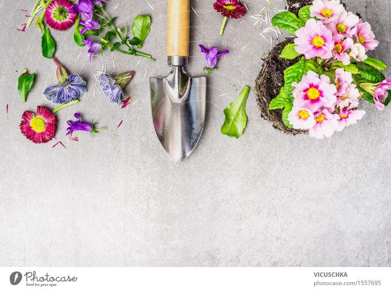 Gartenarbeit mit Blumen und Schaufel Natur Pflanze Sommer Blatt gelb Blüte Stil Design Freizeit & Hobby Tisch Blühend Beton