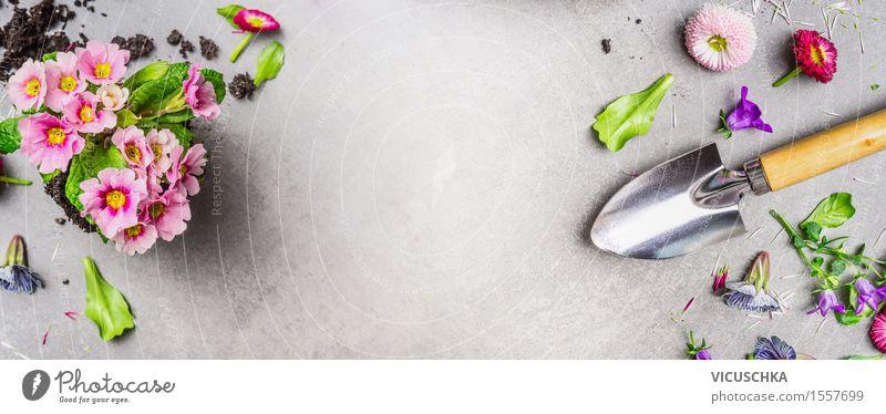 Gartenblumen mit Erde und Gartenschaufel Natur Pflanze Sommer Blume Blatt Blüte Herbst Frühling Stil Design Dekoration & Verzierung Textfreiraum Blühend Fahne