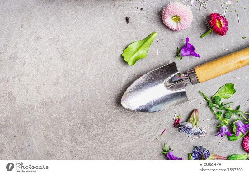 Handschaufel und Garten Blumen Natur Pflanze Sommer Blume Blatt gelb Blüte Hintergrundbild Stil Garten Stein Design Freizeit & Hobby Tisch Blühend Beton