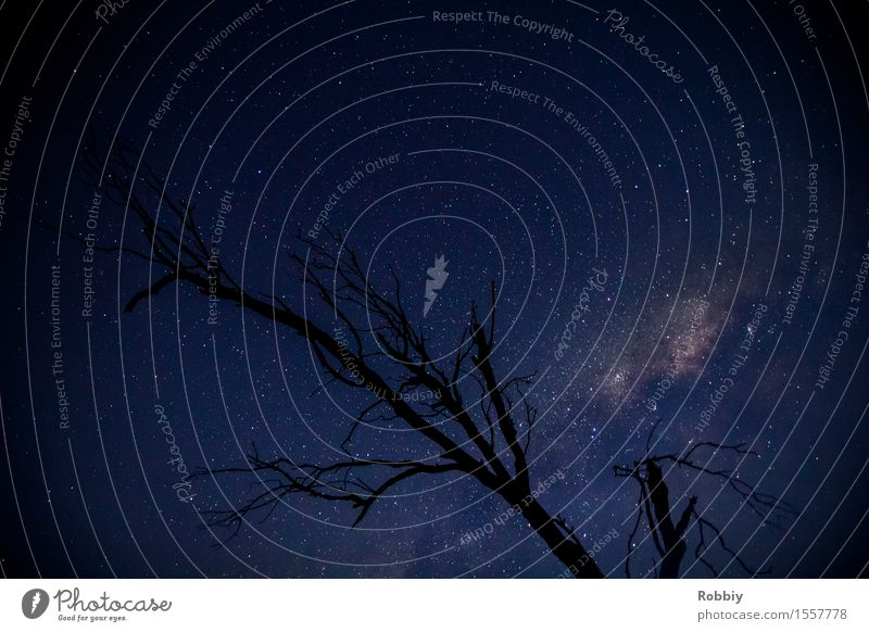 Sternengeäst Himmel Natur Ferien & Urlaub & Reisen blau Baum Ferne Umwelt Religion & Glaube Horizont träumen leuchten Beginn einzigartig Unendlichkeit Weltall