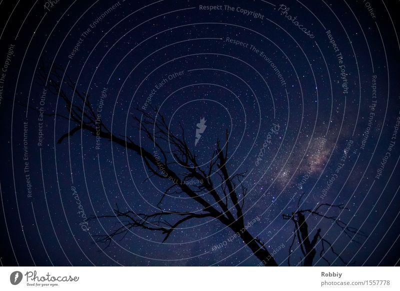 Sternengeäst Umwelt Natur Himmel Wolkenloser Himmel Nachthimmel Baum leuchten Ferne Unendlichkeit blau Beginn einzigartig Endzeitstimmung Horizont