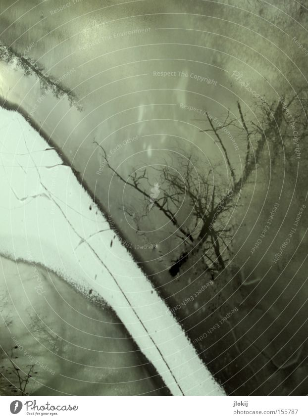 Under The Tree Eis Schnee Wasser Baum Reflexion & Spiegelung Winter kalt grau dunkel See Fluss gefroren Bach