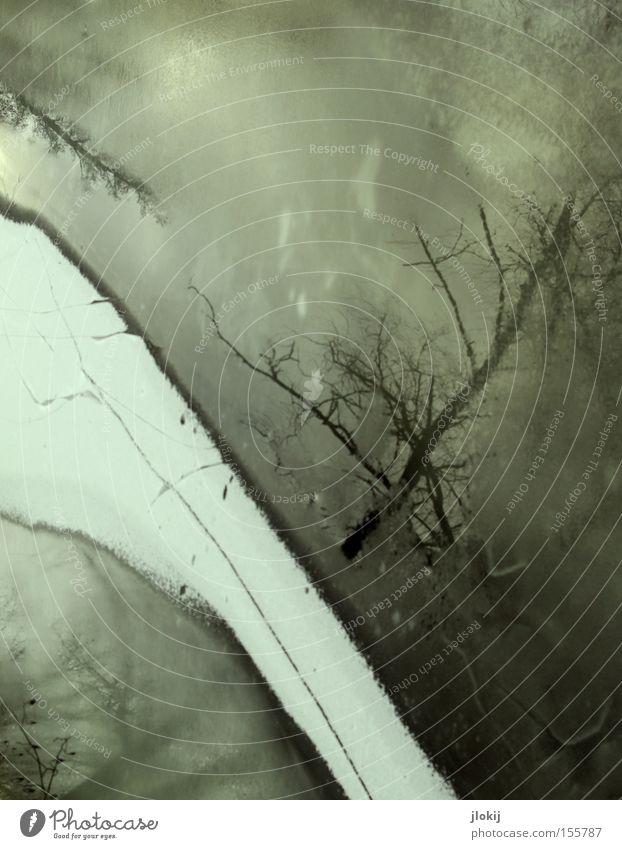 Under The Tree Wasser Baum Winter kalt dunkel Schnee grau See Eis Fluss gefroren Bach