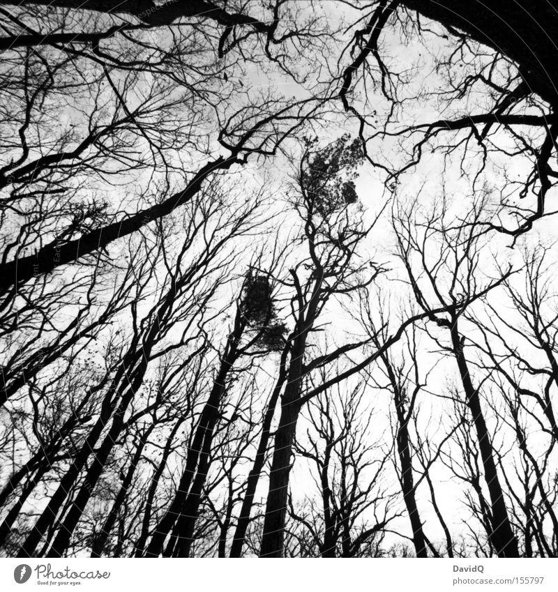 90° Wald Laubwald Baumstamm Ast Zweig Skelett Winter Blatt Himmel trist Weitwinkel Geometrie Schwarzweißfoto Herbst orthochrom