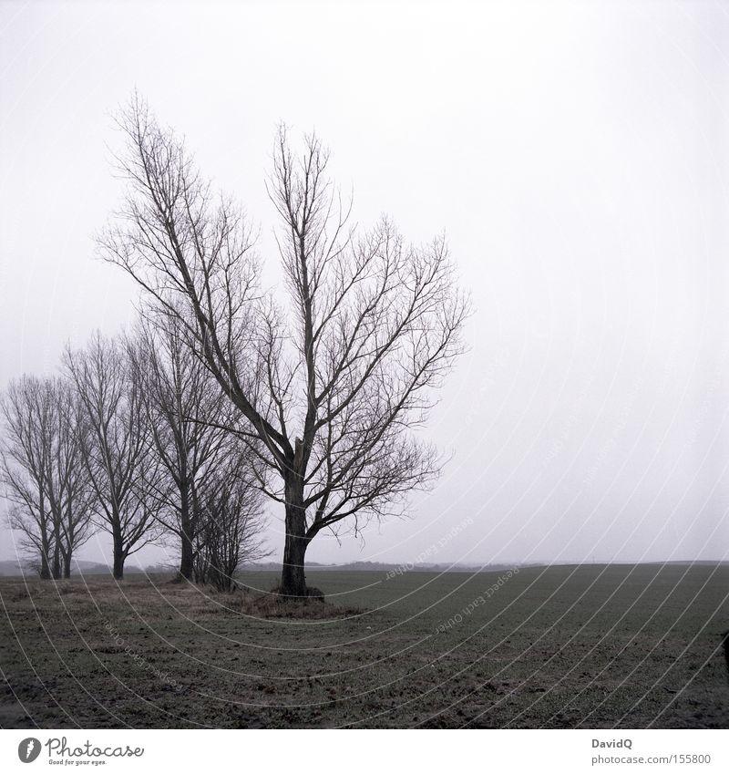 trist Baum Winter Einsamkeit Ferne kalt Wiese Traurigkeit Nebel Vergänglichkeit Weide Dezember schlechtes Wetter