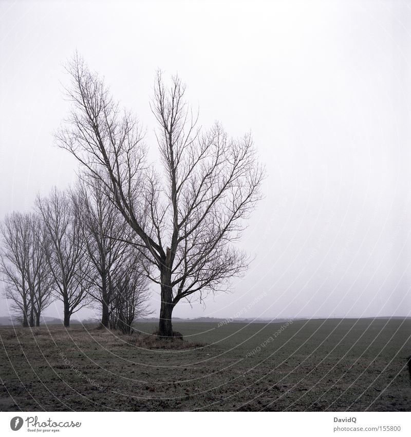 trist Baum Winter Einsamkeit Ferne kalt Wiese Traurigkeit Nebel trist Vergänglichkeit Weide Dezember schlechtes Wetter