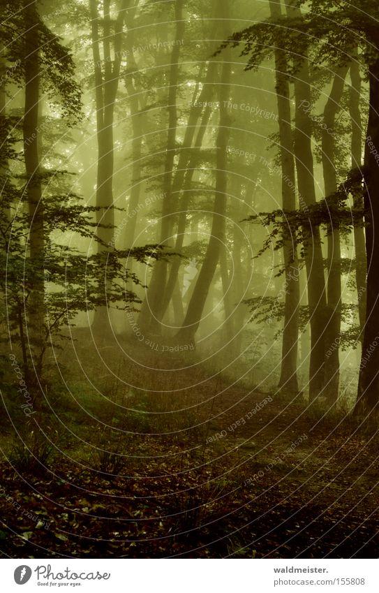 Wald Nebel Baum Blatt mystisch ruhig Erholung Holz Urwald Märchen Zauberei u. Magie grün Gemälde Romantik bezaubernd