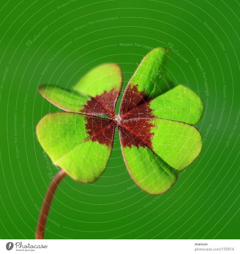 Glück braucht man immer! grün Freude Gefühle Feste & Feiern Erfolg Klee Zukunft Hoffnung Zeichen Wunsch Gruß Geburt Glückwünsche Glücksbringer Makroaufnahme