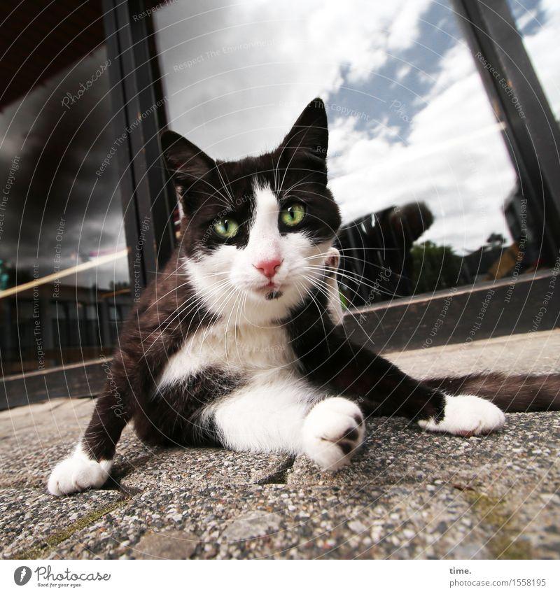 Stray Cat Häusliches Leben Fenster Veranda Fliesen u. Kacheln Tier Haustier Katze 1 beobachten hocken Blick sitzen warten frech selbstbewußt Willensstärke Mut
