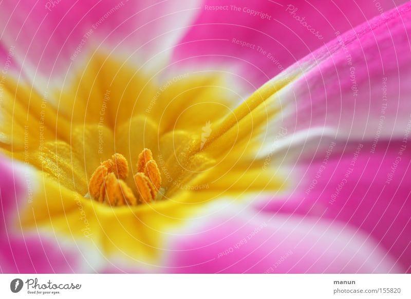 sunshine schön Wärme Frühling Blüte Glück rosa frisch Blühend Schönes Wetter