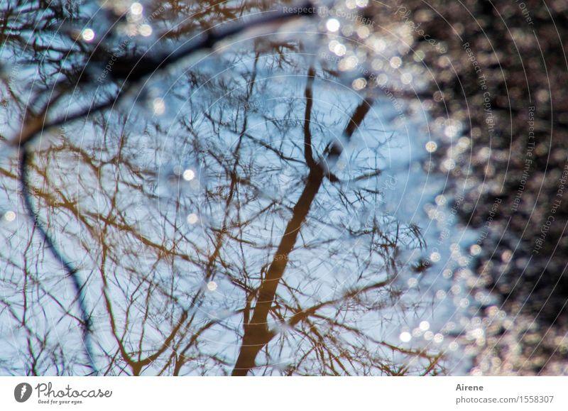 wieder mal nur auf den Boden geschaut Natur Erde Wasser Himmel Klima Wetter Schönes Wetter Baum Ast Pfütze glänzend ästhetisch Flüssigkeit Freundlichkeit nass