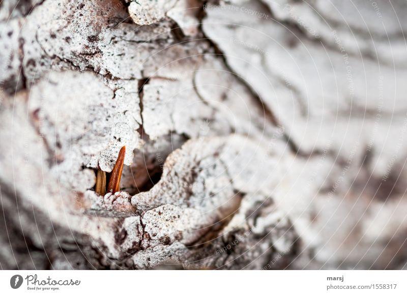 Osterhäschen? Natur Baum Baumrinde Tannennadel Fichtennadel Holz Spitze dünn authentisch einfach klein natürlich Einsamkeit verstecken Versteck unruhig Farbfoto