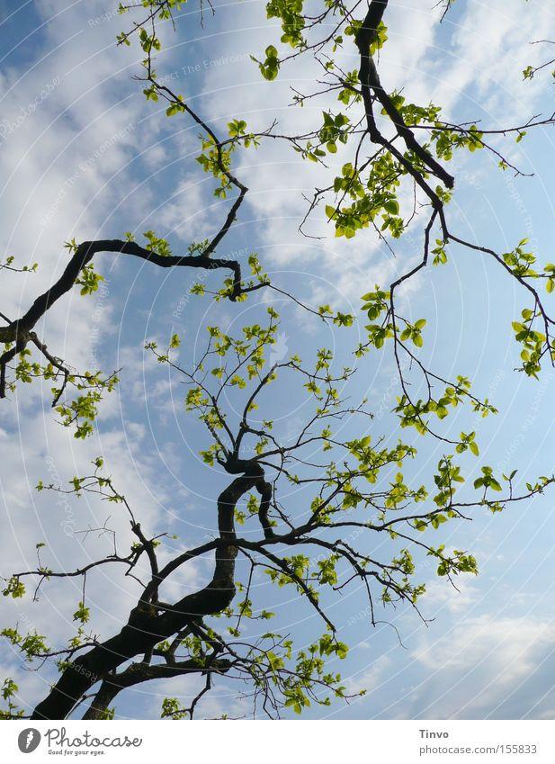 Vorfreude Ferien & Urlaub & Reisen Blatt Frühling frisch Fröhlichkeit Klarheit Ast Zweig Trieb aufwachen Neuanfang heiter