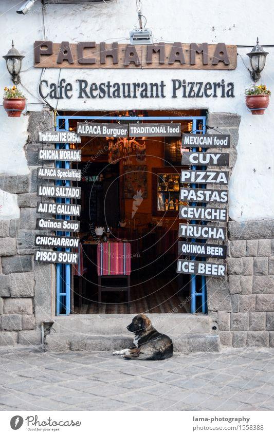 Pachamama Ernährung Italienische Küche Pizzeria Tourismus Cuzco Peru Südamerika Restaurant Gastronomie Mauer Wand Tür Hund Eingang Eingangstür Café Inka
