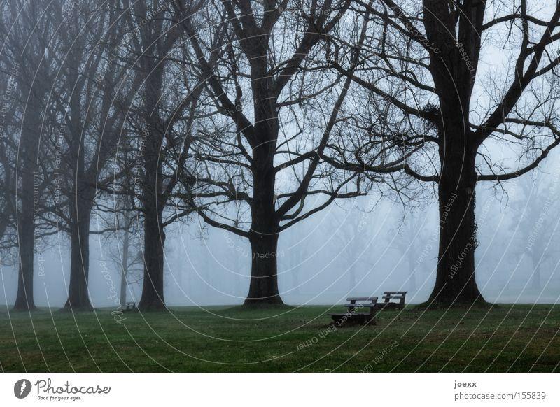 Bankenkrise Natur Baum ruhig Einsamkeit dunkel Garten Traurigkeit Park Nebel Krise