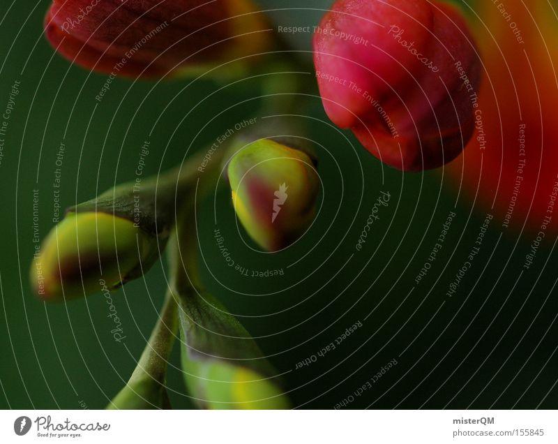Life finds a way. Frühling Freesie Blume frisch dezent Natur Konzentration Blütenknospen Blattknospe Hoffnung Neuanfang Beginn Leben Farbe Farbstoff grün