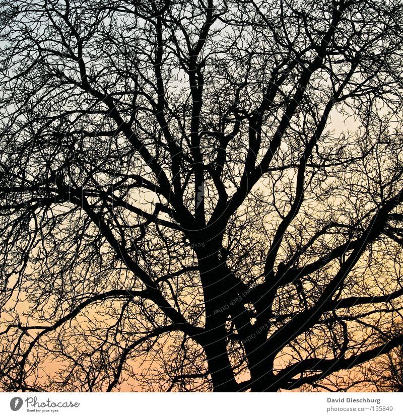 Astnetzwerk Himmel Baum blau Winter Farbe Farbstoff orange Netzwerk Baumstamm