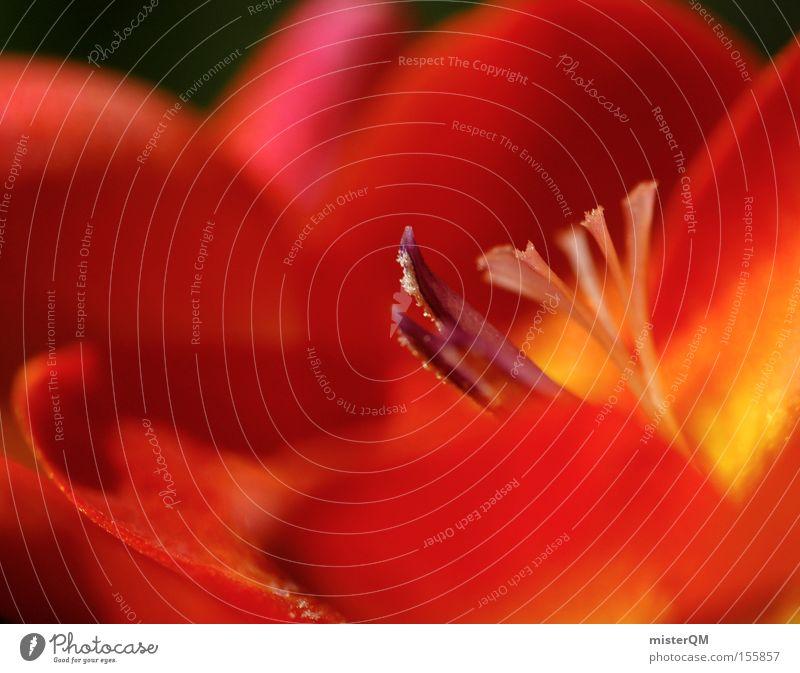 Der Duft Des Frühlings. Freesie Blume frisch dezent Natur Konzentration Blütenknospen Blattknospe Hoffnung Neuanfang Leben Farbe Farbstoff grün Detailaufnahme
