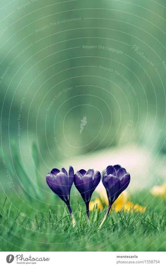Frühling Natur Pflanze grün Blume ruhig Umwelt Wärme Wiese natürlich klein frisch authentisch Schönes Wetter Klima rund