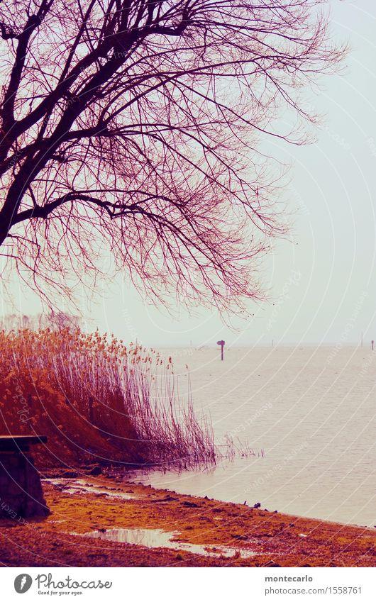 Winter Umwelt Natur Landschaft Erde Wasser Klima Wetter schlechtes Wetter Wind Baum Gras Sträucher Seeufer Bodensee dunkel authentisch Flüssigkeit kalt nass