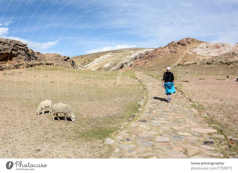 Isla del Sol Mensch Ferien & Urlaub & Reisen Jugendliche Junge Frau Landschaft Tier Ferne Wege & Pfade Tourismus wandern Ausflug Insel Abenteuer Spaziergang Spazierweg Schaf