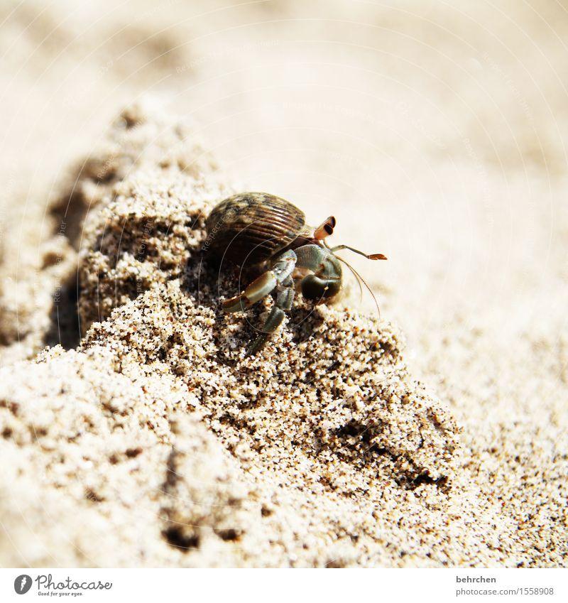 prima klima | auch für die kleinsten Natur Ferien & Urlaub & Reisen schön Meer Tier Ferne Strand Auge außergewöhnlich Freiheit Tourismus Sand Ausflug