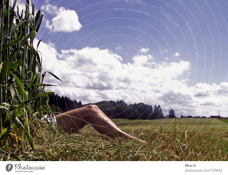 Sommerfreuden :-) Frau Wolken Erwachsene Wiese Landschaft nackt Gras Beine Feld Kornfeld Blauer Himmel Blumenwiese Versteck Mais Getreide